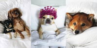 Here's How to Make Your Pet An Adorable Influencer