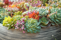 5 pretty succulents to turn your home office into an indoor oasis